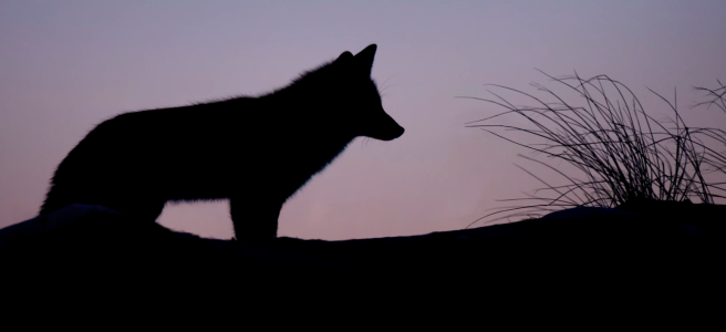 Illustration: A wolf https://unsplash.com/photos/9rloii_qmmw
